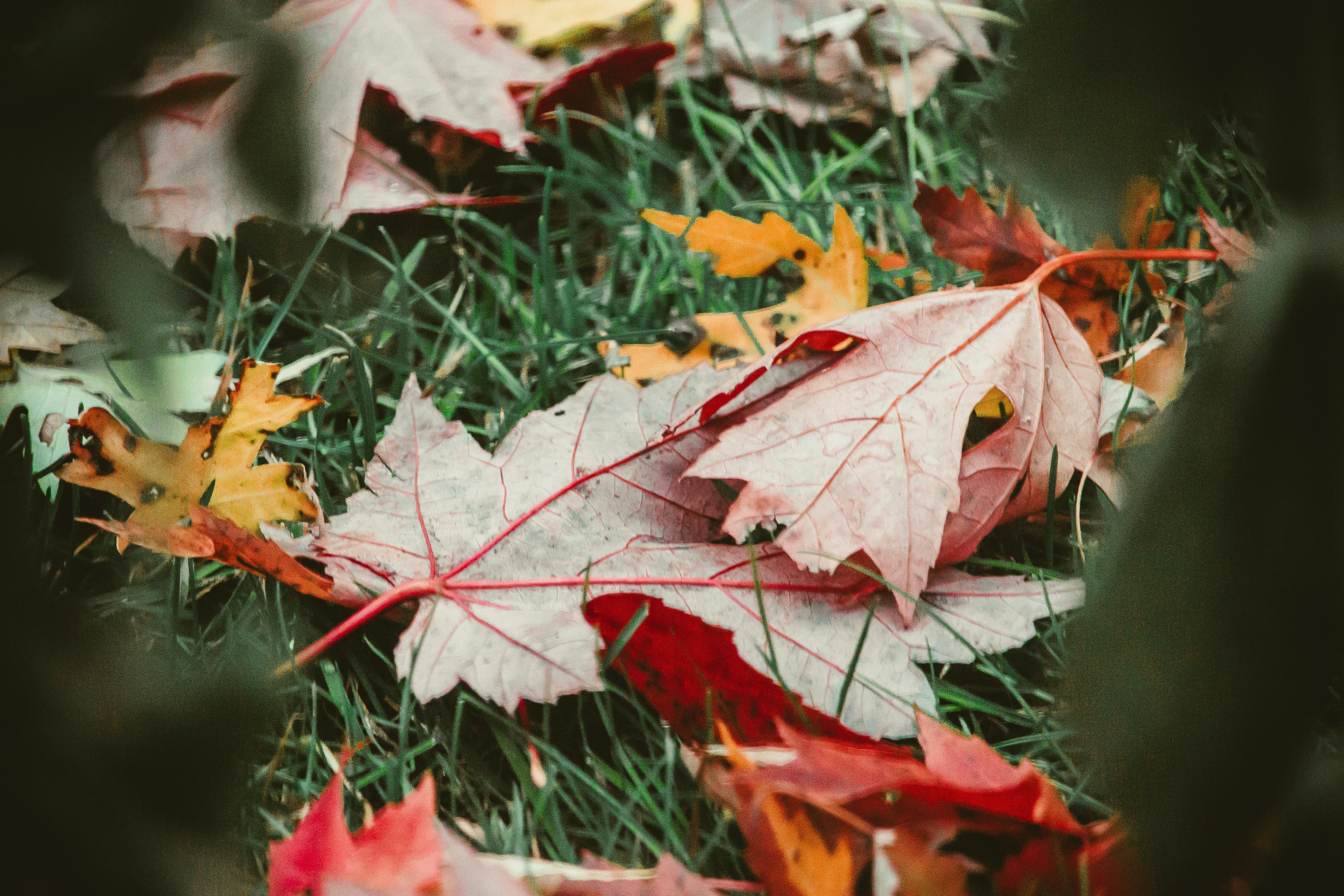 Jardin d'automne : le préparer à l'hiber