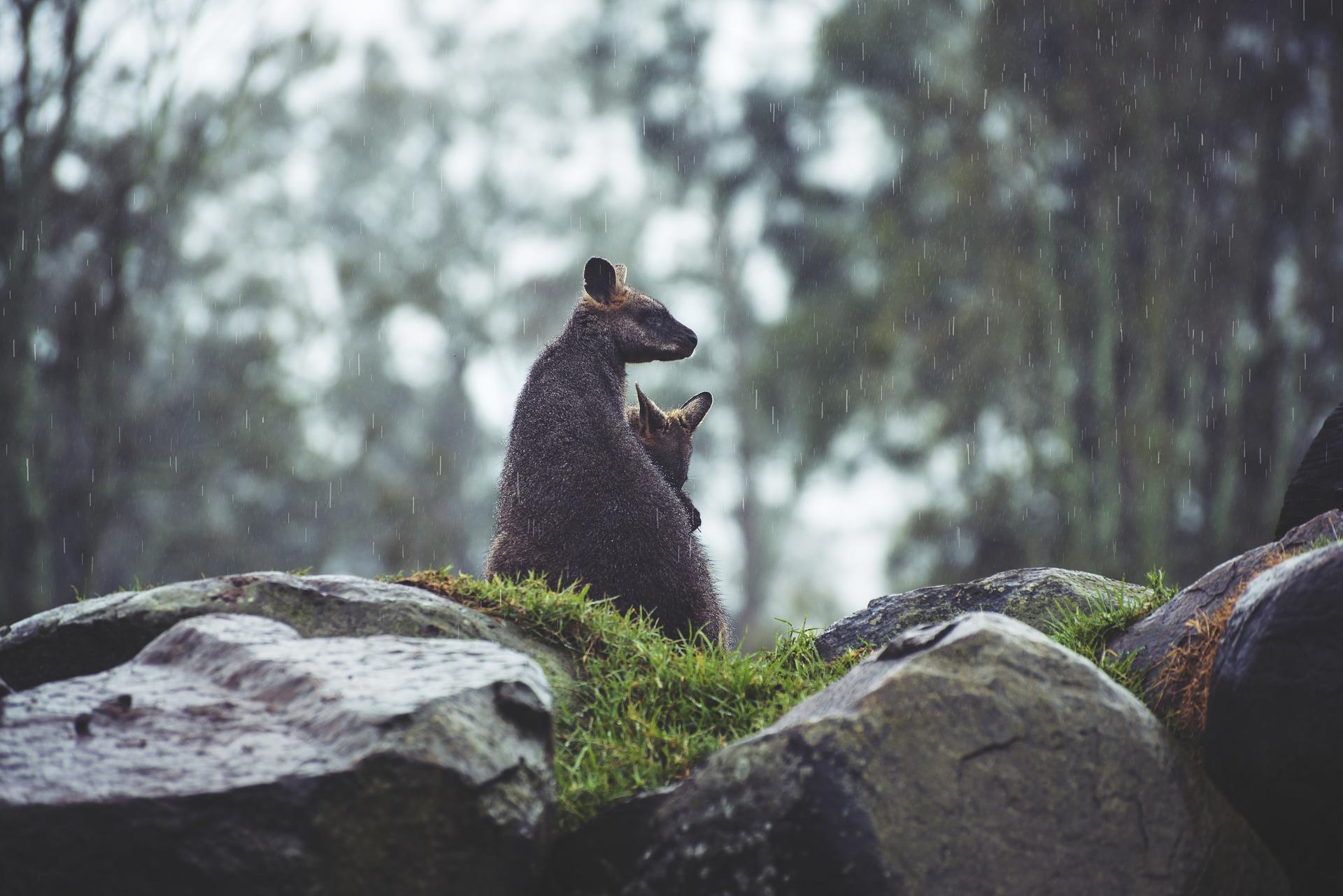Les 10 meilleurs endroits en Australie pour découvrir la faune sauvage