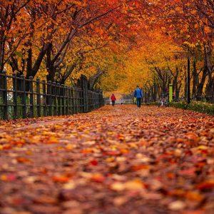 Idées de sorties à faire en automne