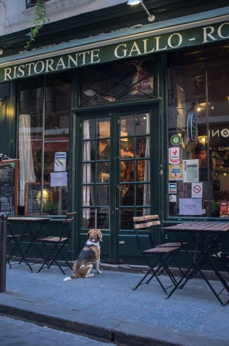 Gastronomie française : tout savoir sur la cuisine française